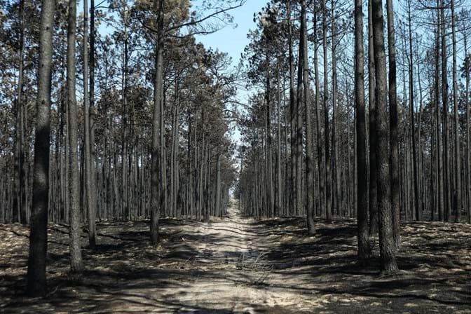 Revisão das regras de limpeza da floresta